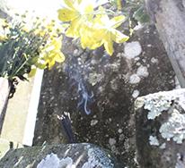 墓石の種類と選び方