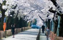 都立青山霊園[東京都の霊園・墓地]霊園・墓地検索サイト『ハナミズキ』